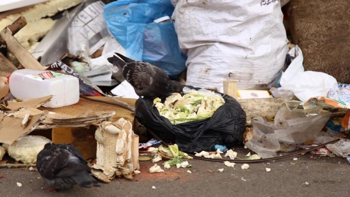 Не хватает сотни площадок: прокуратура указала мэрии на проблемы с вывозом мусора в Челябинске