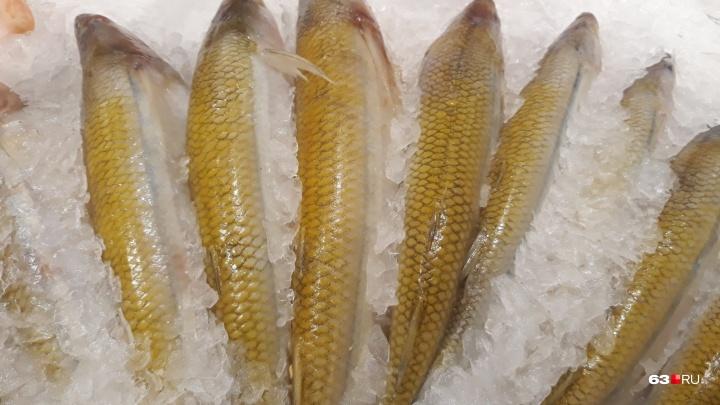 В Самаре нашли восемь партий зараженной рыбы из Турции и Питера