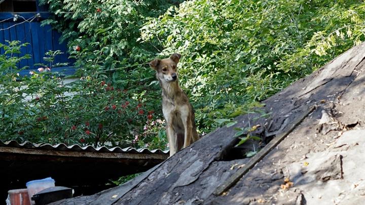 Житель Азовского района убил двух собак лопатой и садовыми ножницами