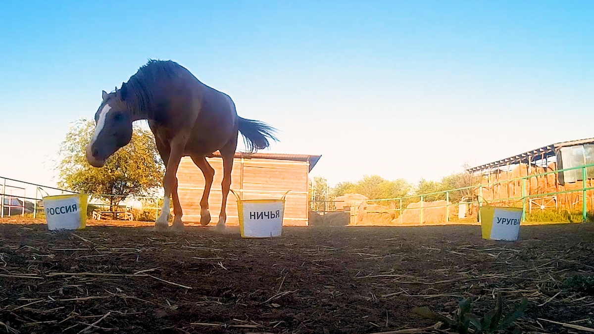 Конь выбирал из трех одинаковых ведер с овсом