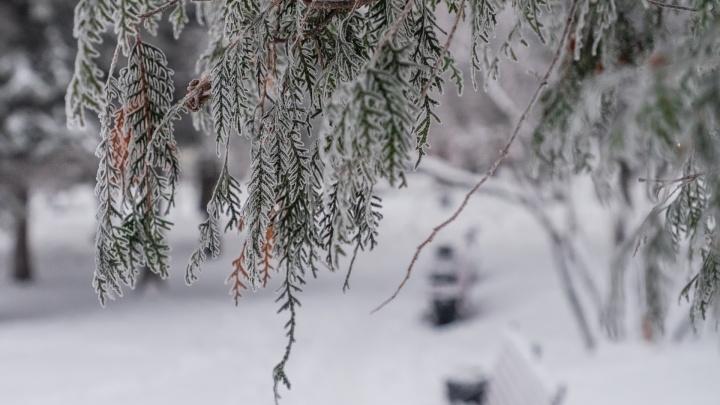Небольшой снег и слабый ветер: рассказываем о погоде в Прикамье в новогодние каникулы
