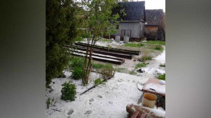 «Что, опять зима?»: смотрим 10 фото тюменцев, чьи дачные участки засыпал крупный град