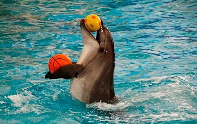 Зажигательное шоу дельфинов в Уфе!