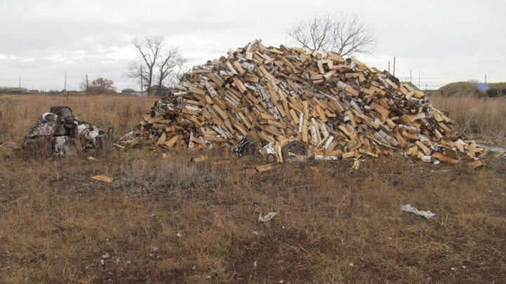 Зауралец незаконно срубил деревьев на миллион рублей