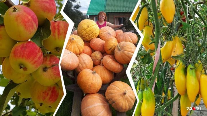 Диадема из тыквы, гигантская морковка и королевские томаты: восхищаемся урожаем тюменцев в 12 кадрах