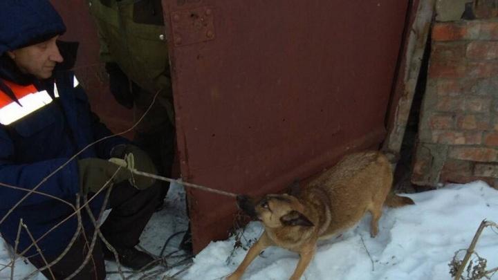 Собака оказалась в ловушке в глубоком подвале и умирала от голода