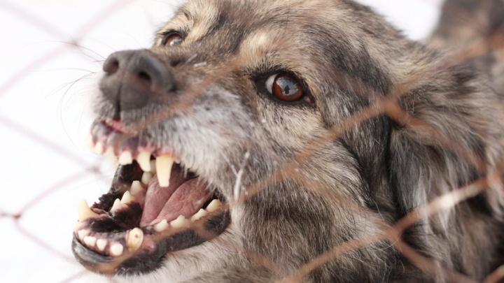 Стая псов растерзала руку девушки на остановке в «Солнечном»