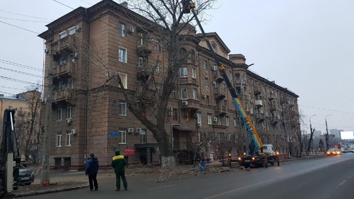 В Волгограде депутат гордумы пропустил заседание ради спасения деревьев на Советской