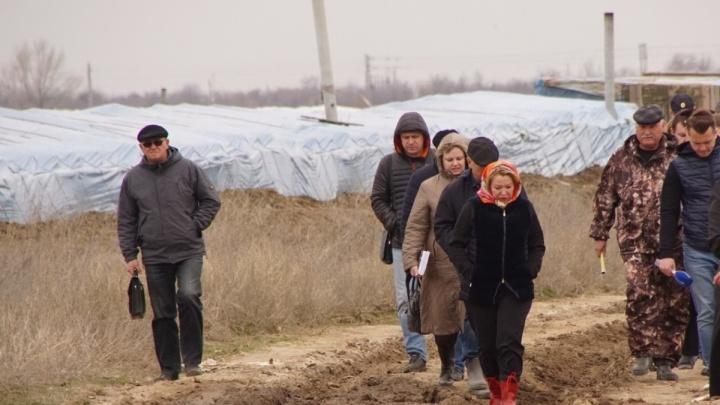 «Разбегаются, как тараканы»: волгоградские депутаты распугали китайцев в теплицах