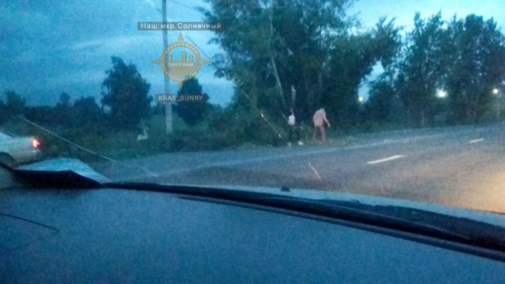Парень ночью пытался убрать упавшее на дорогу дерево и его сбила машина