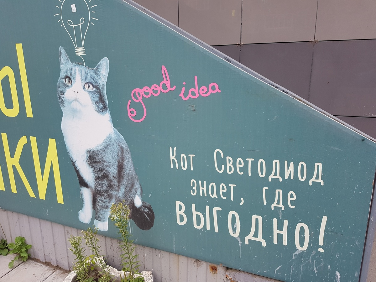 Сейчас Светодиода узнают не по объявлениям, а по фото на вывеске магазина