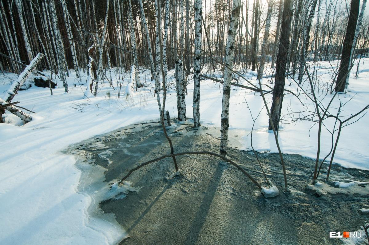 Бетонная роща: рядом с карьером на ЖБИ рабочие зацементировали лес