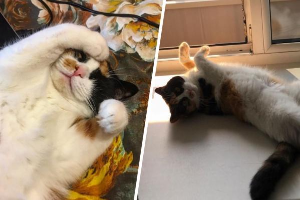 Кошка Зина очень любит позировать кверху пузиком