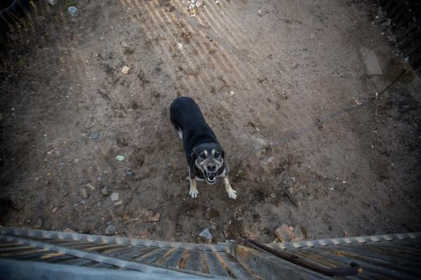 Сейчас в Центре по проблемам домашних животных около 20 собак-охранников