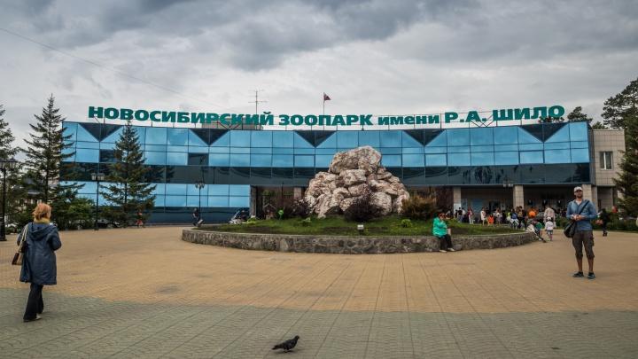 Скоро спячка: новосибирский зоопарк меняет график работы