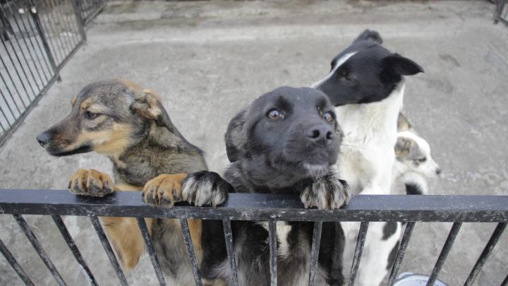 Из собачьего приюта «Друг» украли 35 тысяч рублей