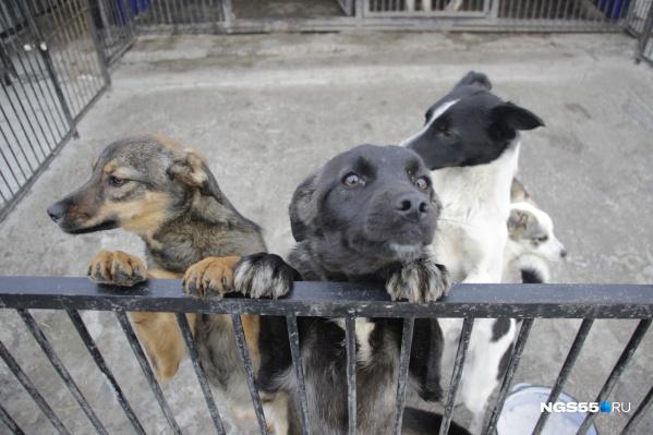 В приюте содержится более 450 собак