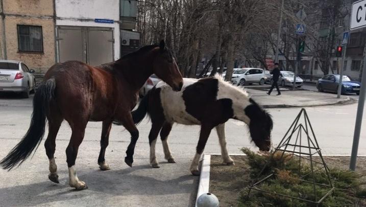 Сбежавшие лошади мешали движению в центре Тюмени