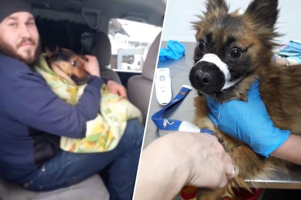 За спасение животных волонтеру грозит уголовное наказание