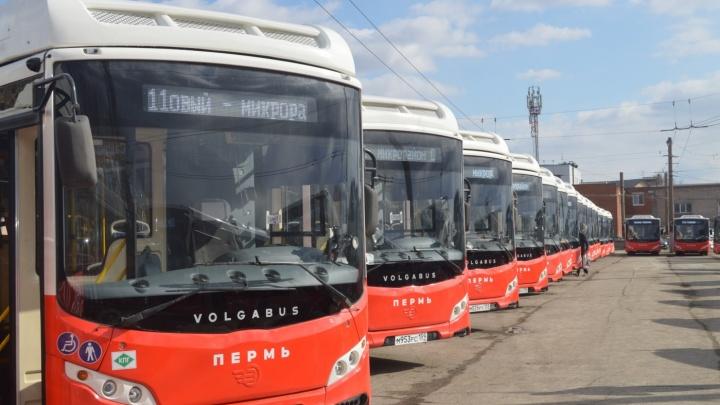 В Пермь поставили всю партию новых автобусов Volgabus