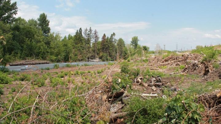 «Зачищали землю под высотки?»: по факту вырубки деревьев на 5-й просеке возбудили уголовное дело