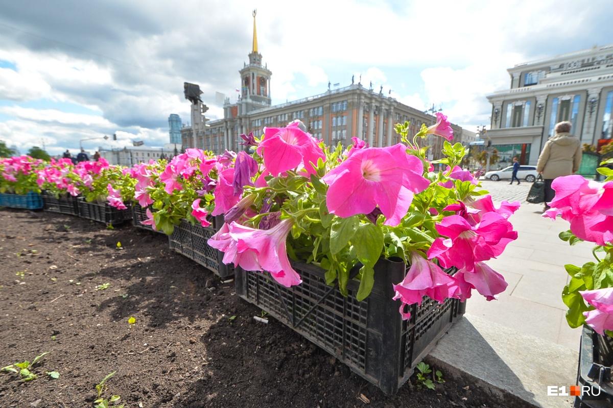 На площади 1905 года высаживают цветы...