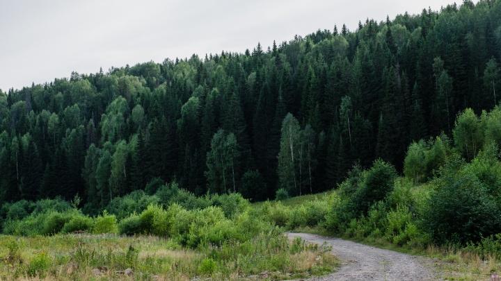 «Услышали слабый голос и хрип»: в Прикамье полицейские нашли пенсионерку, потерявшуюся в лесу