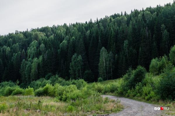 Из леса удалось выйти только с помощью полицейских