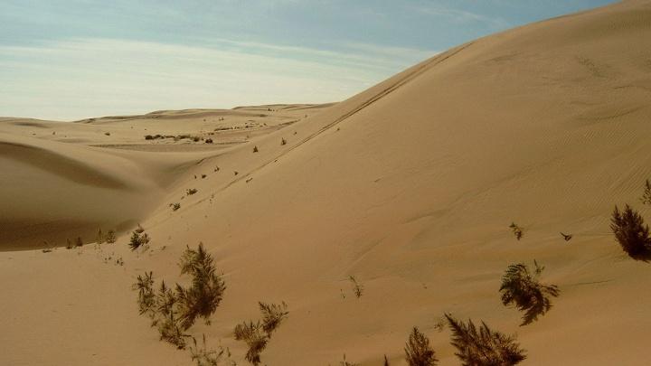 Учёные УрФУ нашли в монгольской пустыне метеорит и будут изучать его в Екатеринбурге