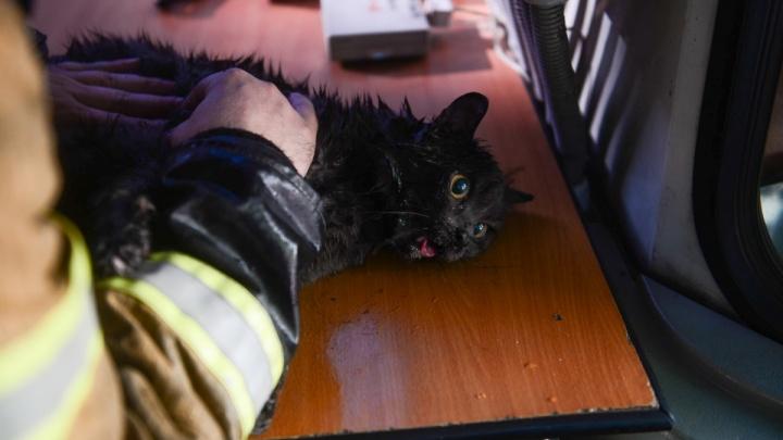Все любят котиков! Фото спасения пушистика из пожара на Вайнера побило все рекорды в Instagram E1.RU