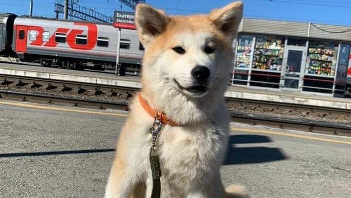 На челябинском вокзале при использовании новой услуги РЖД потеряли собаку порноактрисы
