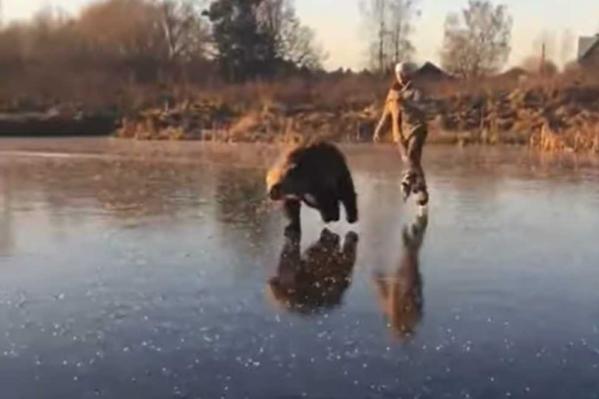 Медведь прокатил по льду мужчину