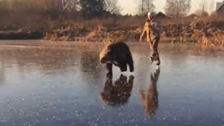 В Ярославской области медведь прокатил мужчину по льду: мы поговорили с автором нашумевшего видео