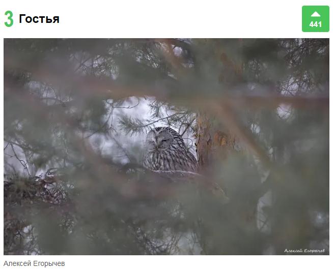 Алексей Егорычев «поймал» сову в объектив фотоаппарата и очень близко приблизился ко второму месту