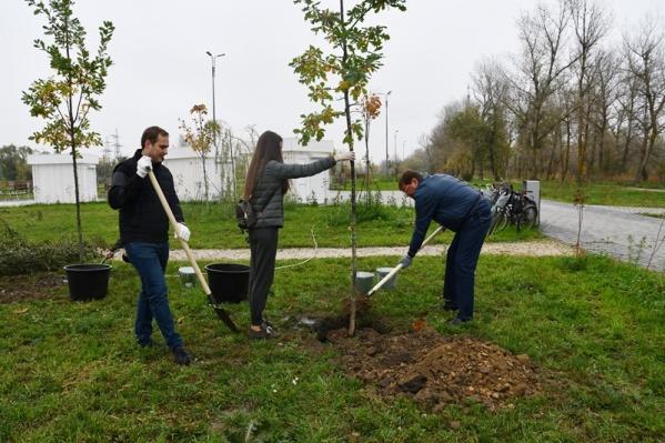 19 октября деревья сажали на территории всех 11 поселений Аксайского района