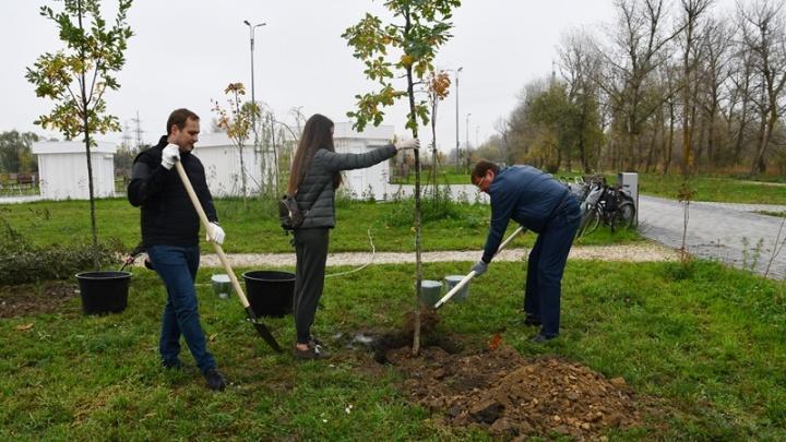 1256 деревьев и 336 кустарников: в Аксайском районе сделали упор на озеленение парков и скверов