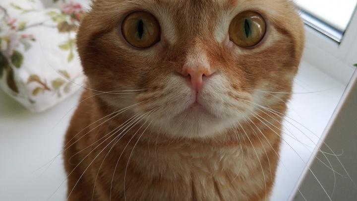 В Международный день кошек тюменцы рассказали про своих домашних любимцев: 10 милых историй