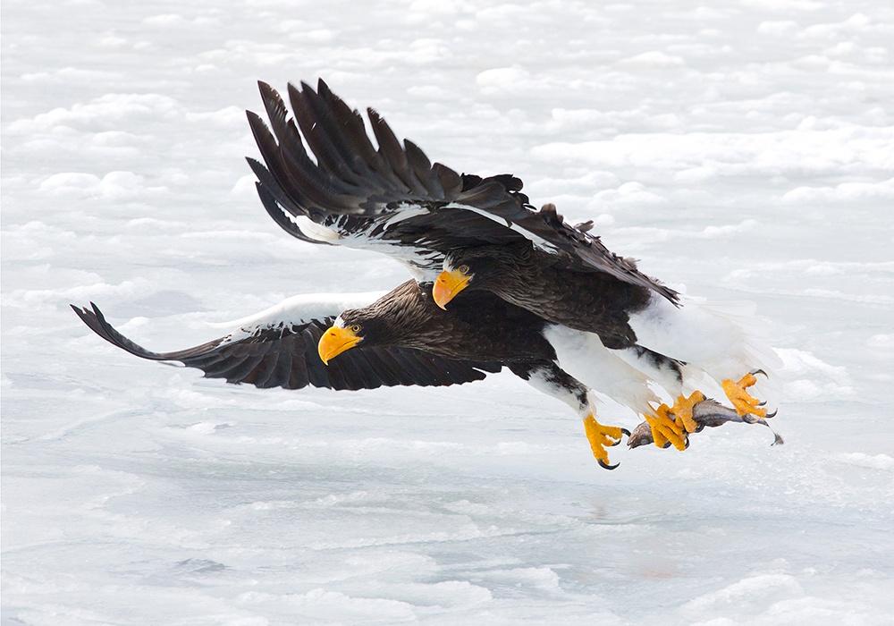 На выставке множество фото животных в естественной среде