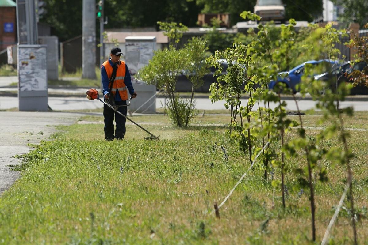 Вместе с травой рабочие срезают цветы и саженцы деревьев