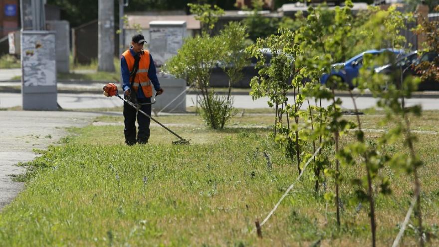 Липовая работа: в Челябинске вместе с травой на газонах скосили саженцы деревьев