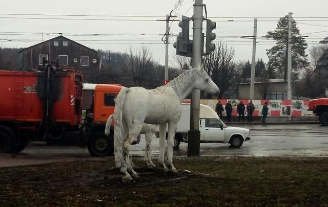 В Уфе сообщили о «мине» под скульптурой лошадей