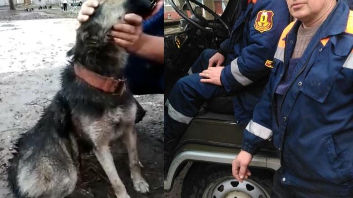 «Кто и за что так издевался над животным?»: в Ростове Великом собаку насадили на арматуру
