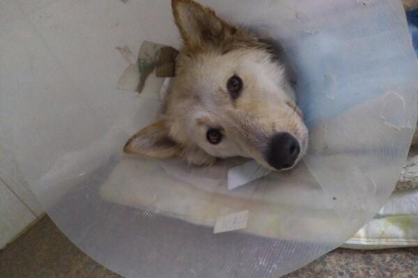 Раненую собачку назвали Подружкой