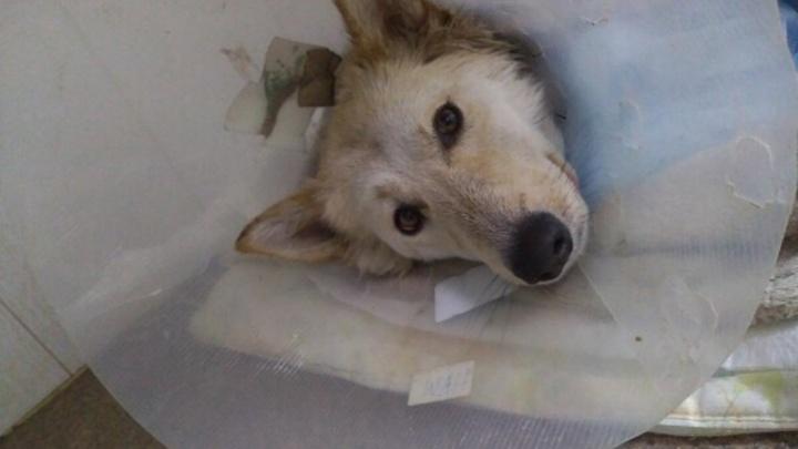 На Затулинке дробью расстреляли собаку