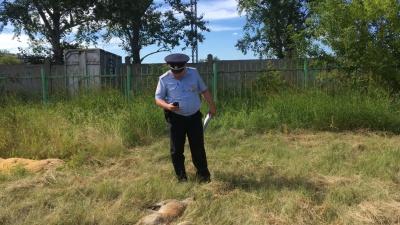 Дети нашли в Старом Кировске трупы собак и мертвого хорька