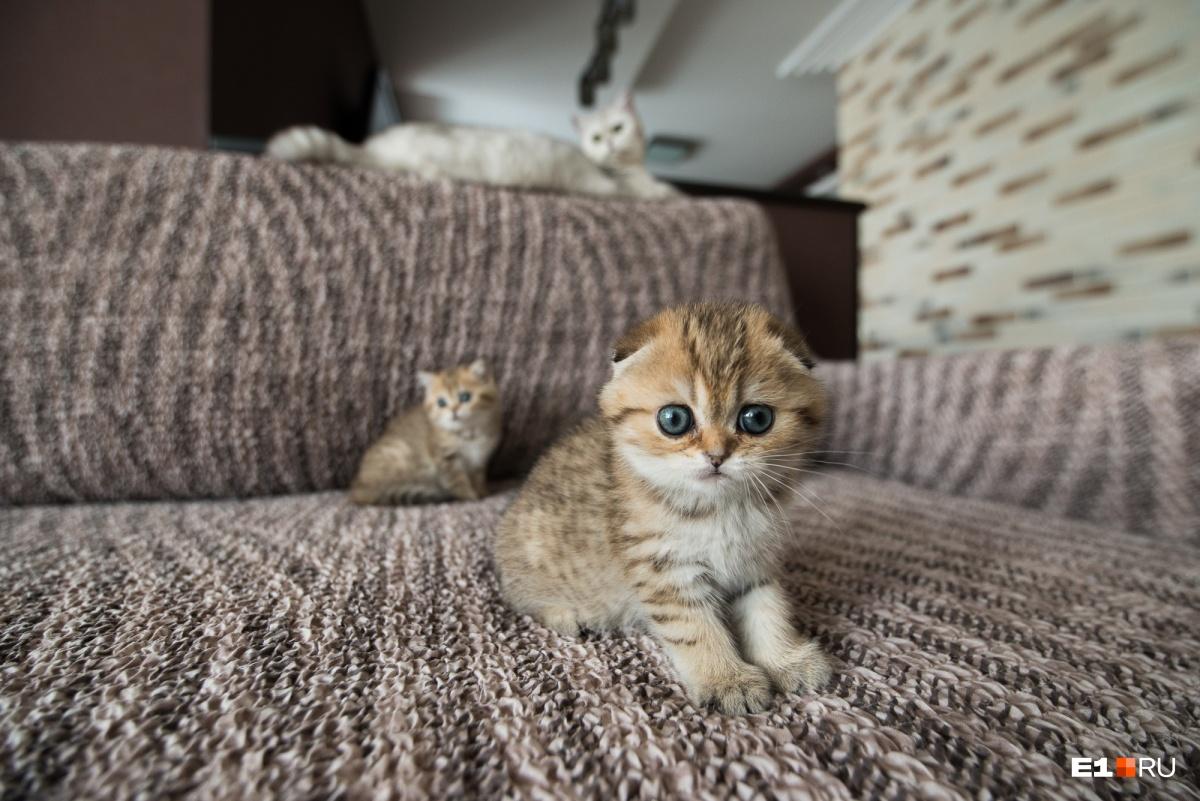 Делать прививки можно и котятам, и взрослым кошкам