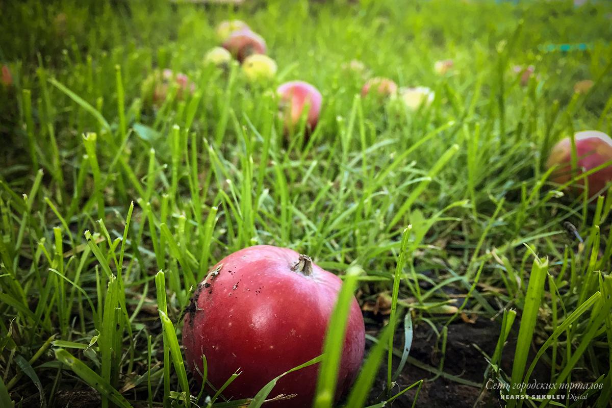 Шарлотка, варенье и пастила — далеко не всё, что можно сделать из яблок