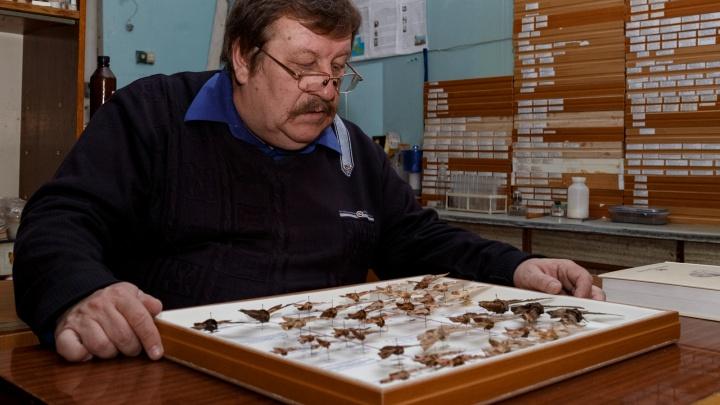 Профессор Самарского университета собрал фантастическую коллекцию бабочек