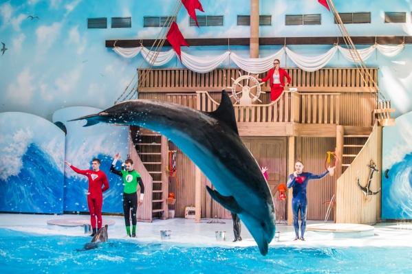 Артисты дельфинария готовят к Новому году специальную программу