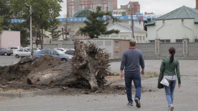 «Вы попали под обстрел»: мэр Челябинска потребовала объяснить, зачем возле «Родины» спилили деревья